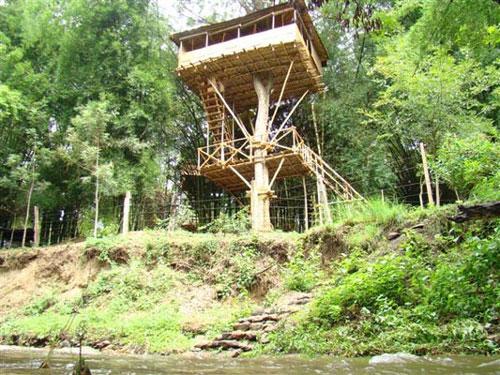 Safari Land Resorts Masinagudi Resorts Resorts In